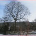 Wetter heute Thalheim Erzgebirge 12 Uhr 20 28.01.2014