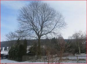 Thalheim Erzgebirge am 28.01.2014 um 12:20 Uhr