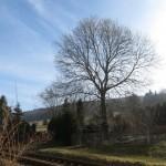 Wetter in Thalheim Erzgebirge am 01.03.2014