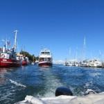 Bootfahren ohne Führerschein in Warnemünde