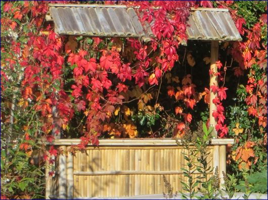 Meine Bambus Gartenbar im Herbst 2014