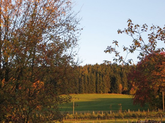 indian-summer-thalheim-erzgebirge5