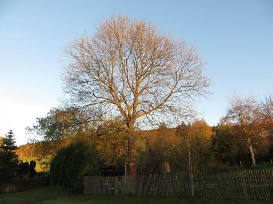 Zum Schluss mein 4 Jahreszeiten Baum am 01. November