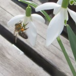 Frühlingsfotos Blogparade