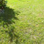 Mein Rasen Ende April